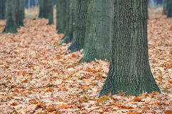 Trees alley Stock Photography