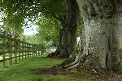 Alley of trees in Ireland Stock Photo