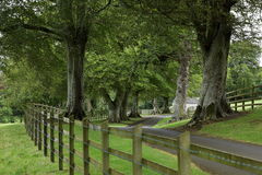 Alley of trees in Ireland Royalty Free Stock Photography