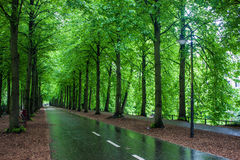 Alley with trees Royalty Free Stock Photos