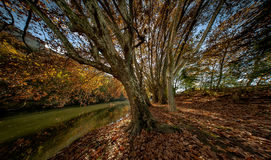 Alley of trees near the river. Near Pamplona, Spain stock photography