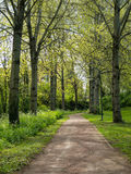 Alley of trees with new leaves Royalty Free Stock Photos