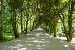 Alley between trees in Oliwa Park in Gdansk, Poland. Royalty Free Stock Images