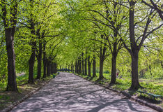 Alley with trees in the park Royalty Free Stock Images