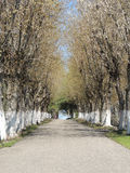 Alley of trees Stock Image