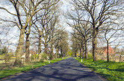 Alley of trees in springtime Royalty Free Stock Photo