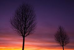 The alley of trees at sunset. Dramatic sunset in an alley of trees Royalty Free Stock Images