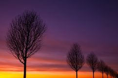 The alley of trees at sunset. Dramatic sunset in an alley of trees Stock Images