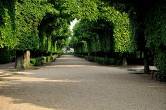 Alley of trees royalty free stock photos