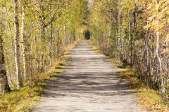 Alley of Trees in Umeå, Sweden Stock Image
