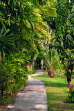 Alley in tropical garden royalty free stock image