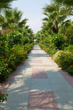 Alley in a tropical garden Royalty Free Stock Photography