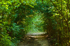 Alley through the tunnel of bushes Stock Photos