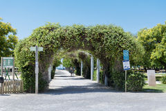 Alley with  tunnel from green trees in row Stock Photos