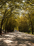 Alley in UW campus. With trees creating natural tunnel Royalty Free Stock Photo