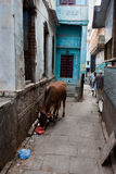Alley in Varanasi Stock Images