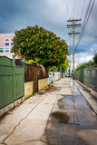 Alley in Venice Beach, Los Angeles  Royalty Free Stock Photography