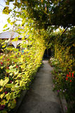 Alley through vine Royalty Free Stock Image