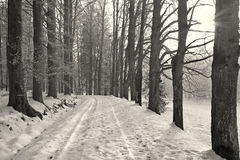 Alley and way in winter morning Royalty Free Stock Images