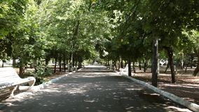 Alley with white benches and leaves swaying in the wind. Nature stock footage