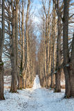 Alley in winter. Stock Images