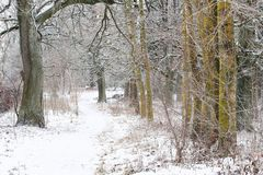 Alley in winter city park with a big oak and a row of some other trees stock photos