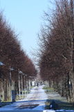 Alley in a winter city. The trees dropped leaves and stand with bare branches against the blue clear sky. Royalty Free Stock Image