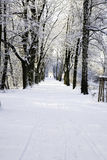 Alley in winter forest Stock Photo