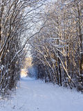 Alley in a winter forest. Snow-covered alley in a winter forest royalty free stock images