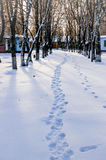Alley in winter Royalty Free Stock Photos