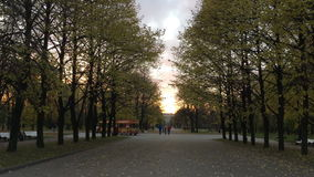 Alleys with trees in the Park. Alleys with trees on two sides relative to a wide pedestrian road, in the Park, the autumn wind plucks leaves from the trees stock footage