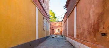 Alleyway with cats and dogs Stock Photos