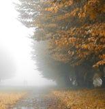 Alleyway in foggy park Stock Photo