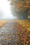 Alleyway in foggy park Royalty Free Stock Images