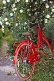 allez à vélo le rouge Images libres de droits