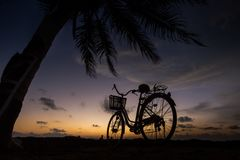 Allez à vélo sur la plage près des palmiers et l'océan au coucher du soleil Photographie stock libre de droits
