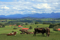 The allgäuer Alps in Bavaria Royalty Free Stock Photography