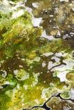 Allgae Fotografia Stock