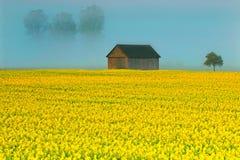 Allgaeu in fiore Fotografia Stock