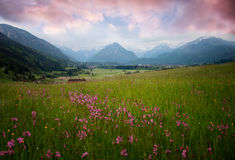 Allgau krajobraz z wildflower łąką przy zmierzchem Fotografia Stock
