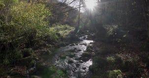 Allgemeine Ansicht des Kurses von einem kleinen Fluss zwischen Bäumen stock video