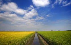 Allgemeine Ansichten des Reisfelds wird bei Sekinchan, Selangor, Malaysia gesehen Stockfotografie