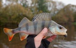 Allgemeine Stange in der Hand des Fischers Stockfotografie
