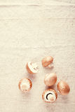 Allgemeiner brauner Pilz auf weg von weißer Tischdecke Lizenzfreie Stockbilder