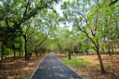 Allgemeiner Park Bangkajao, Thailand Stockbild