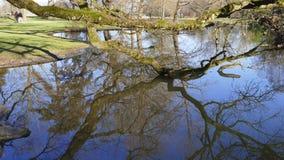 Allgemeiner Park von Schloss Liebling, im See in Förch, hohe Bäume stockbild