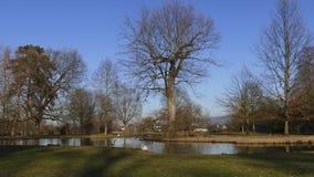 Allgemeiner Park von Schloss Liebling, im See in Förch, hohe Bäume stockbilder