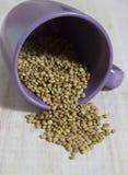 Allgemeines lentill in einem violetten Glas Lizenzfreies Stockfoto