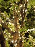 Allgemeines Weihnachten Lizenzfreies Stockbild