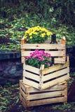 Allhelgonaafton, tacksägelse, garnering av huset och trädgård för ferien Träaskar med krysantemum och vinflaskor Au royaltyfri bild